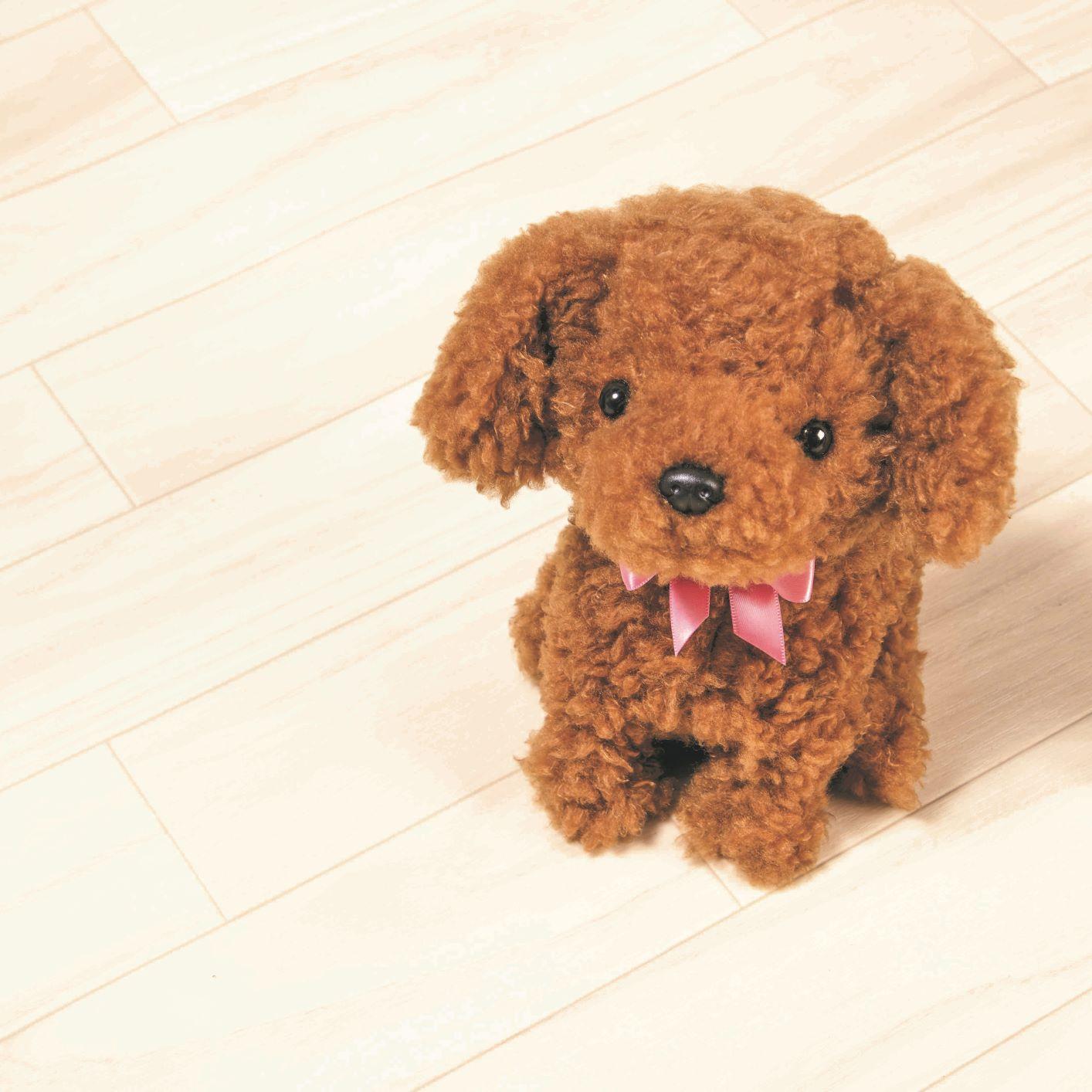 元気な仔犬 トイプードルのショコラちゃん(日・オスト)(週刊新潮DM紹介)